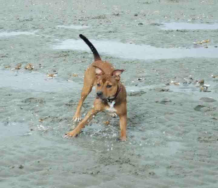 Cassie's Pups 293988_162323580521648_1894896248_n_zpseac91611