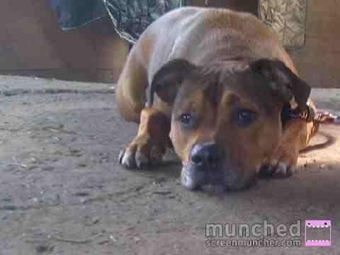 Cassie's Pups 598449_318430381577633_682159199_n_zpsbec46b43