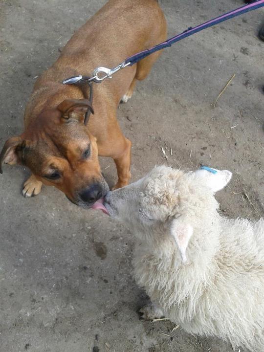 Cassie's Pups IMG_0395_zps10292f32