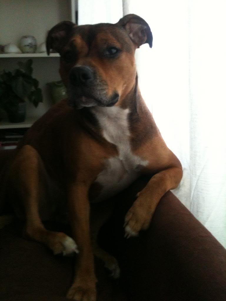 Cassie's Pups IMG_0455_zps508c54f3