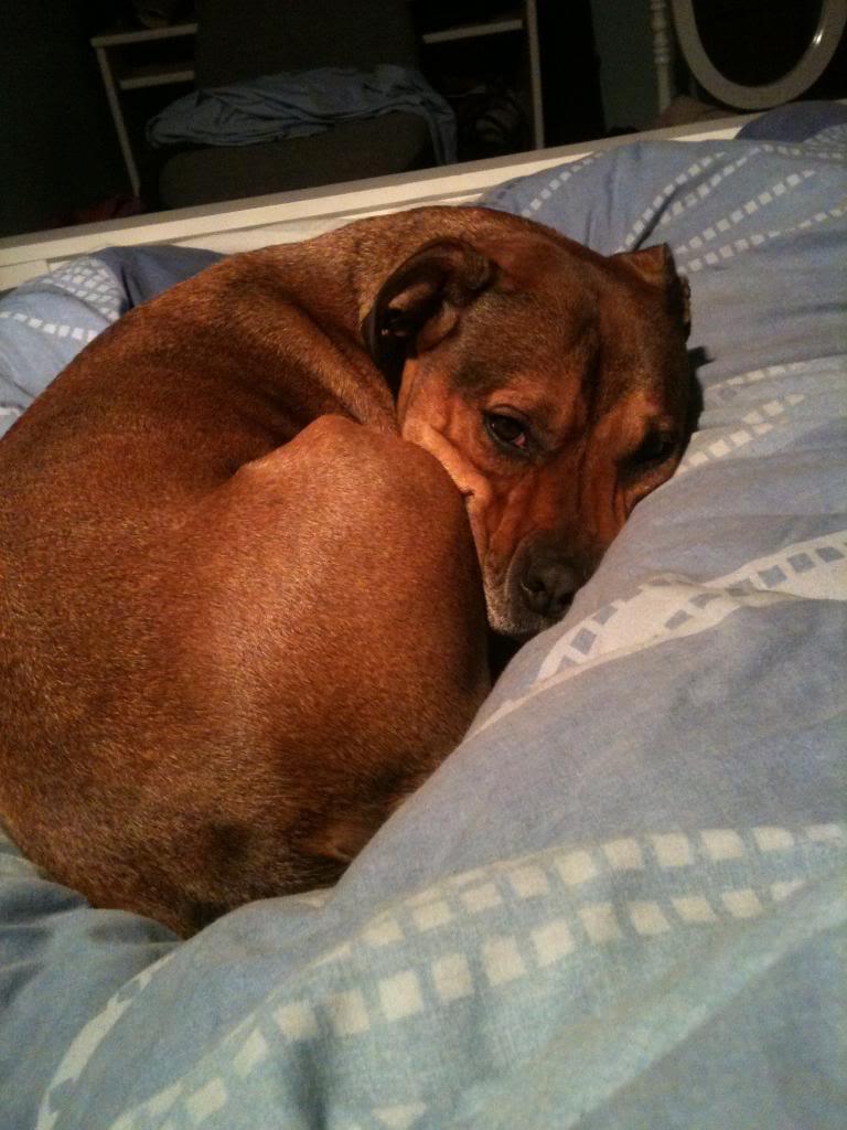 Cassie's Pups IMG_0504_zpsa51a9ea8