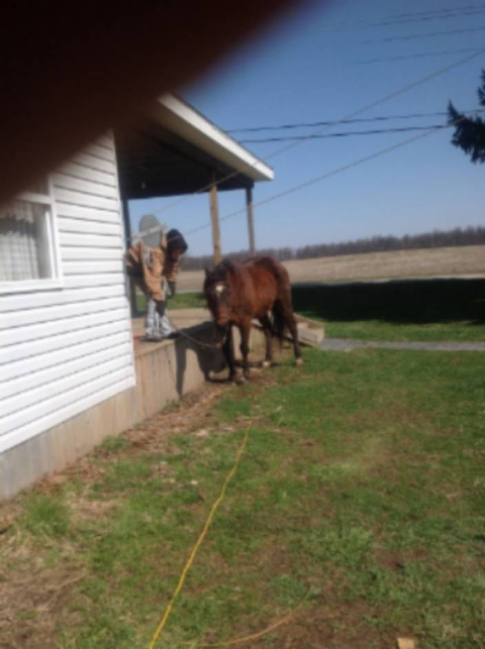 Bringing Back a Starved Horse 3300b3e9-ae90-4c95-afa8-d0fb85053477_zps63b560c8