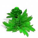 Cannabis Muscarita [SB] CannabisMuscaria_zpse5641e40
