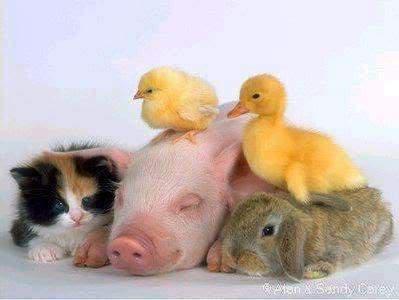 Slike zivotinja ANIMAL