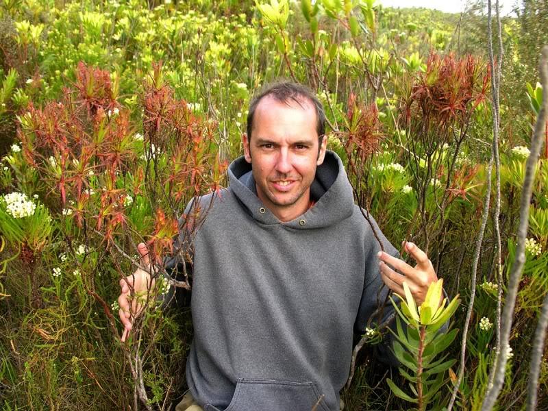 Roridula gorgonias R-1