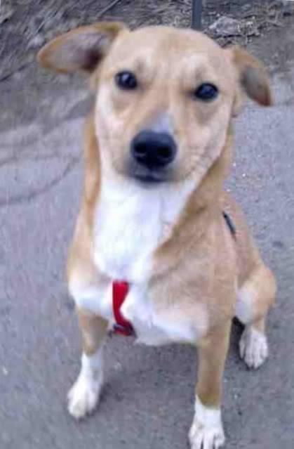 Jingle, dainty female crossbreed, 10 months old  84d738a5