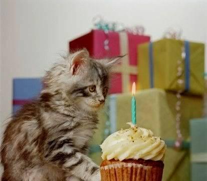 Birthday Greetings Catbirthday