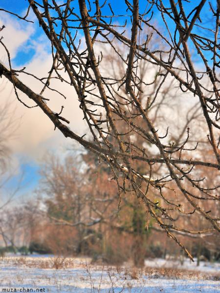 [Đời sống - Văn hóa] Ba câu chuyện xưa về hoa Anh Đào Sakura-winter-03_zpsbae54742