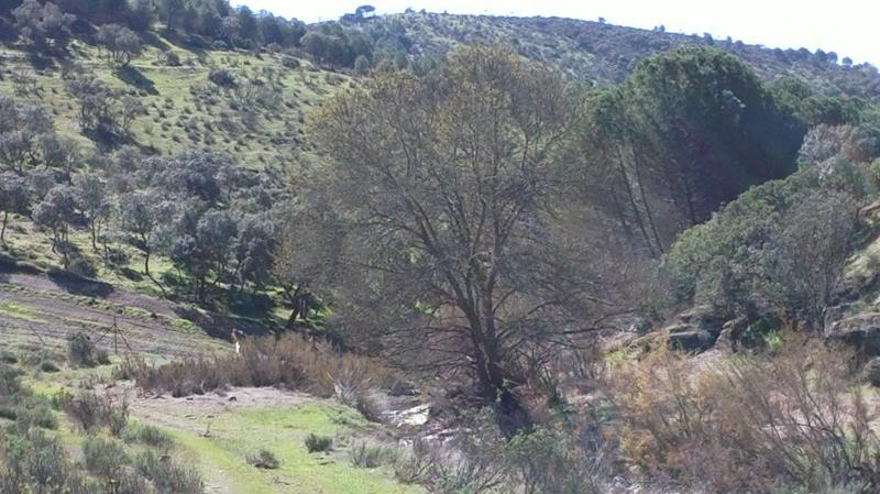 Bajando pòr el Arroyo Descuernavacas. 2014-04-06-080_zps0eaffa7f