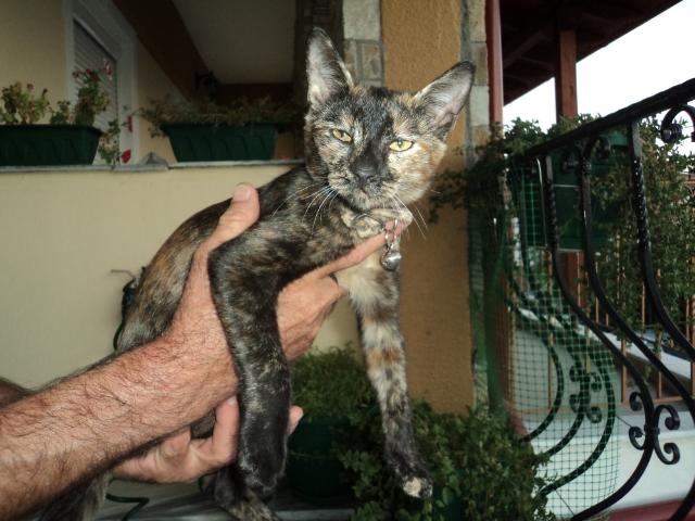 Χαριζεται το πιο γλυκο γατακι, η Μελίνα μας! 788a1050-77e5-489e-9096-0f6a76eaaf44_zpsb4cb0692