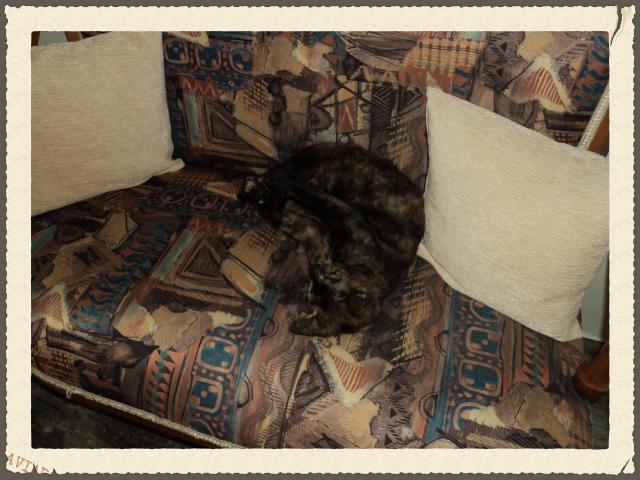 Χαριζεται το πιο γλυκο γατακι, η Μελίνα μας! DSC01640_zpsef5484d2