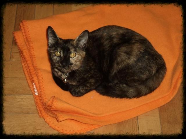 Χαριζεται το πιο γλυκο γατακι, η Μελίνα μας! DSC01645_zpsb1d1a89e