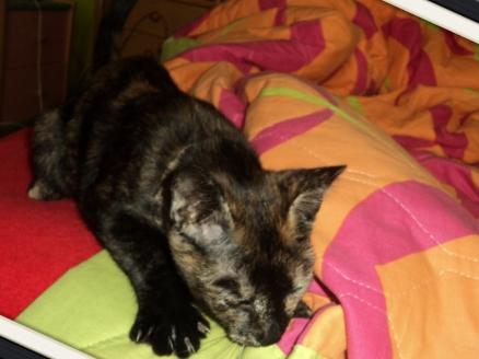 Χαριζεται το πιο γλυκο γατακι, η Μελίνα μας! D16f8b90-fd97-4b0d-9149-7d7cea6c415f_zps8a983ec5