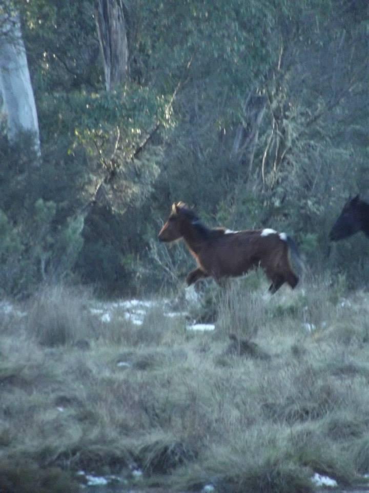 Australian Brumbies!! 10489719_10152272308727712_5658811173084710910_n