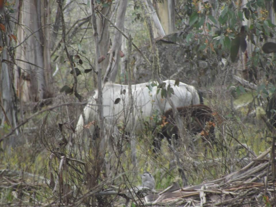 Australian Brumbies!! 1509266_10151888231642712_1605946091_n