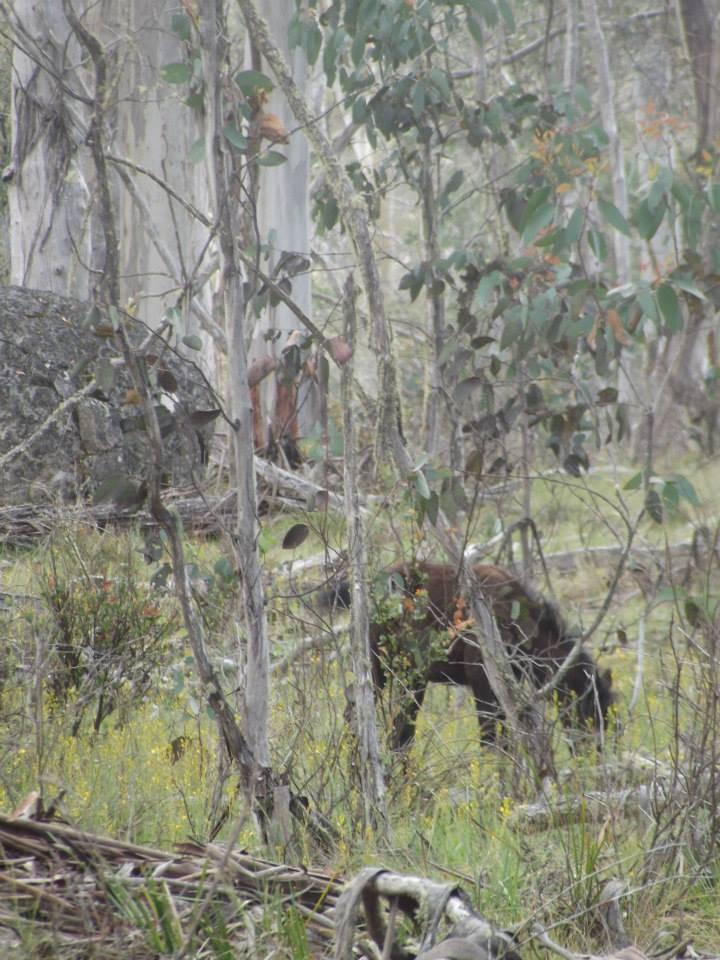 Australian Brumbies!! 1517618_10151888232147712_1587055676_n