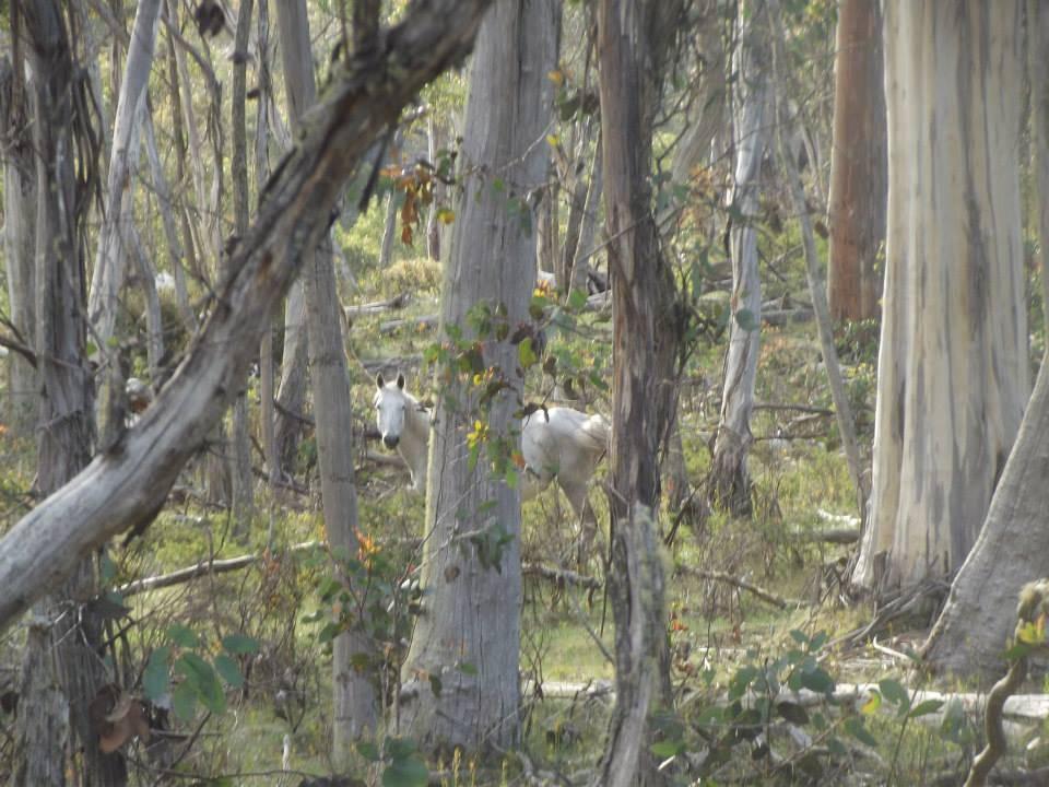 Australian Brumbies!! 1538724_10151888238342712_238014997_n