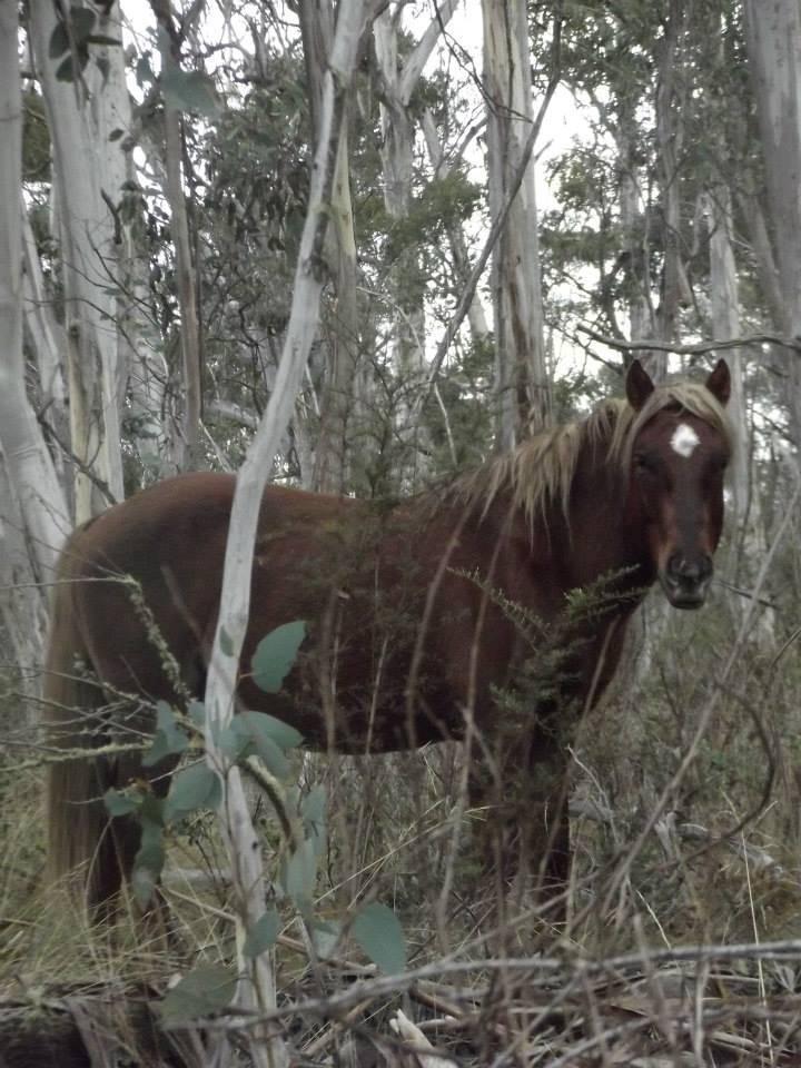 Australian Brumbies!! 379597_10151499248657712_643401168_n