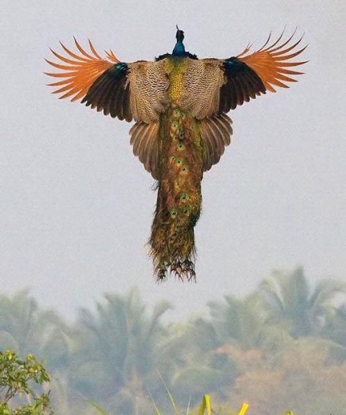 Belles photos d'animaux c'est ici !  - Page 7 Cid_part2_01040609_01090703orange_zps7a9604ef