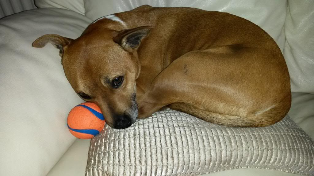 Love my ball! 20140513_192313_zps90eff1fc