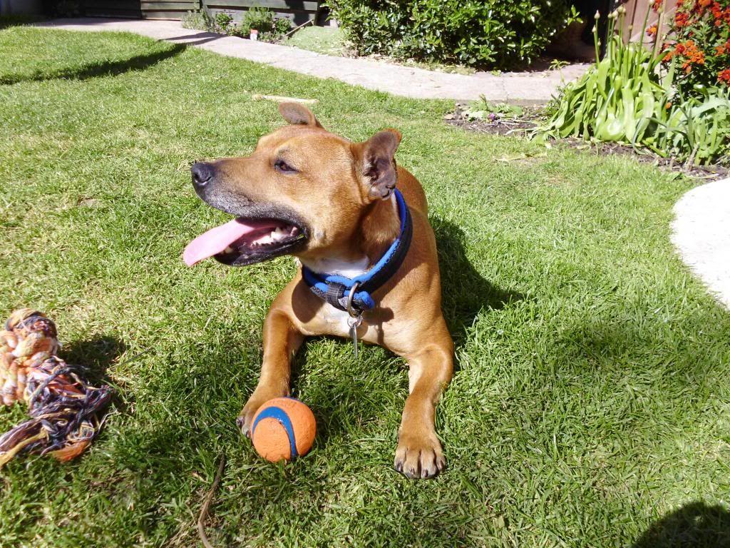 LOVE my ball! P1000079_zpsefd321c2