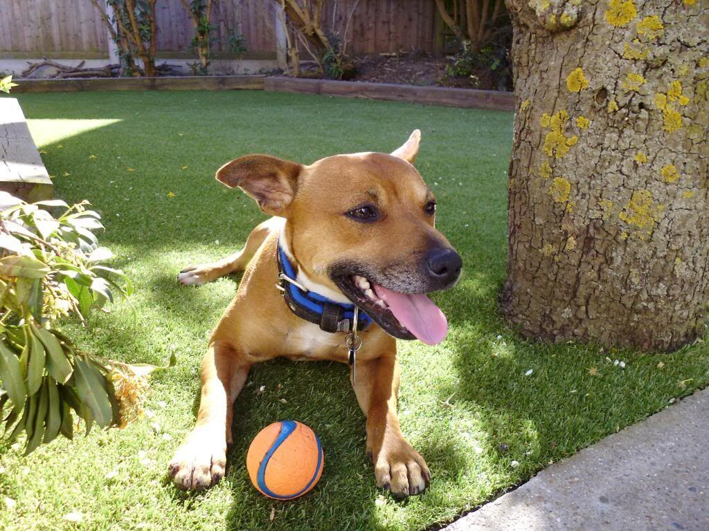 LOVE my ball! P1000109_zpsde24d20e