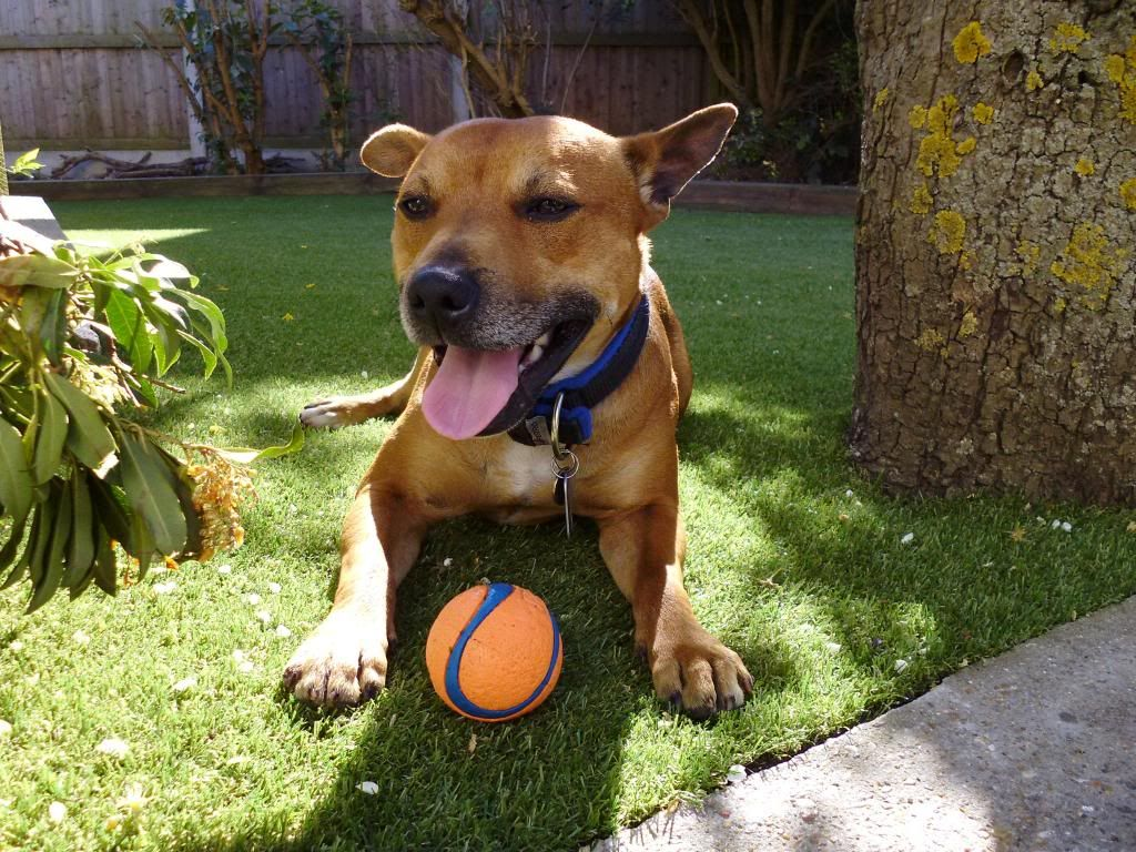 LOVE my ball! P1000110_zps9488bb9f