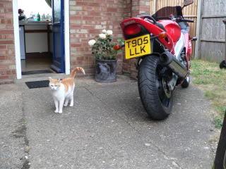 My Cat P1010088