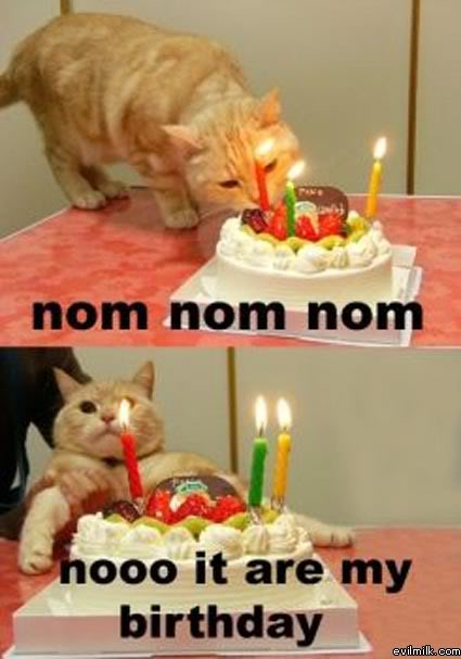 The Birthday Thread. Birthday_Cat