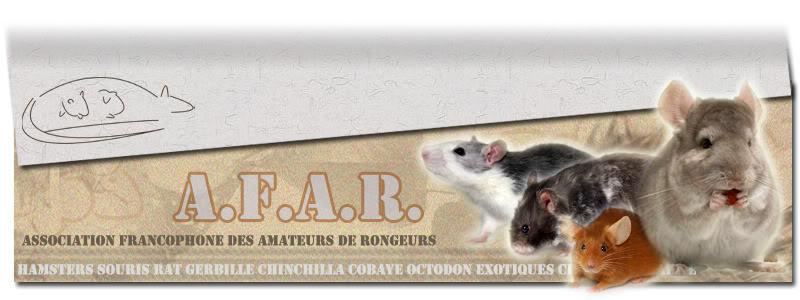 """Association Francophone des Amateur de Rongeurs """"AFAR"""" Ban-29"""