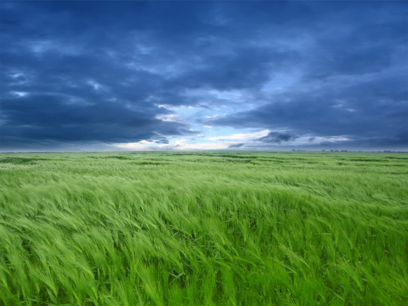Earth-Field-27098.jpg grassy field image by Sarah9926