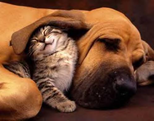 Najslađe životinje na svijetu - Page 2 Baby_animals_012