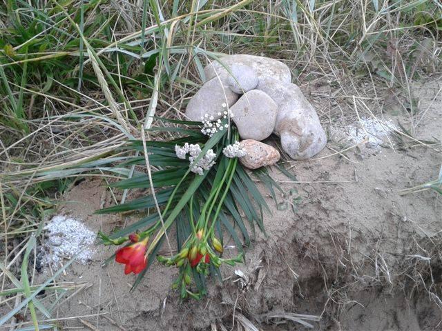 A Celebration of Stella's Life  RIP  2001 - 2014 Stella_zpsea49f97d