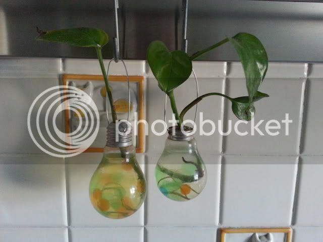 le vaso lampadine 20130414_181511_zps8a04a321