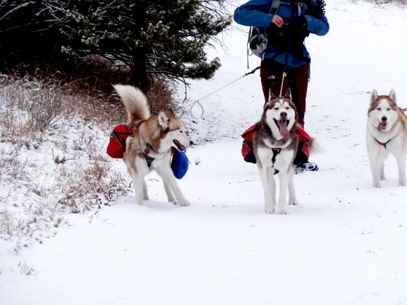 Claudia's husky birthday hike - Salt Lick Trail, Summit County *photo heavy* 11