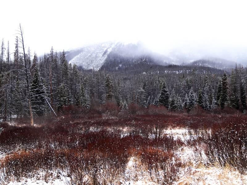 Claudia's husky birthday hike - Salt Lick Trail, Summit County *photo heavy* 24