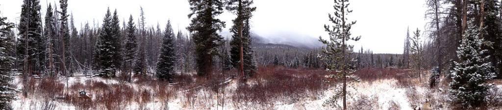 Claudia's husky birthday hike - Salt Lick Trail, Summit County *photo heavy* 25