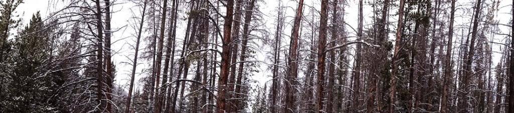 Claudia's husky birthday hike - Salt Lick Trail, Summit County *photo heavy* 26