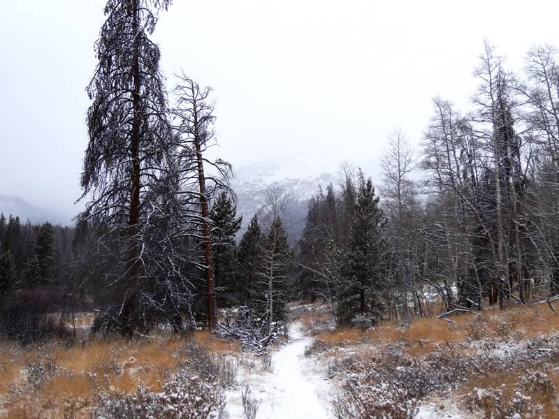 Claudia's husky birthday hike - Salt Lick Trail, Summit County *photo heavy* 33