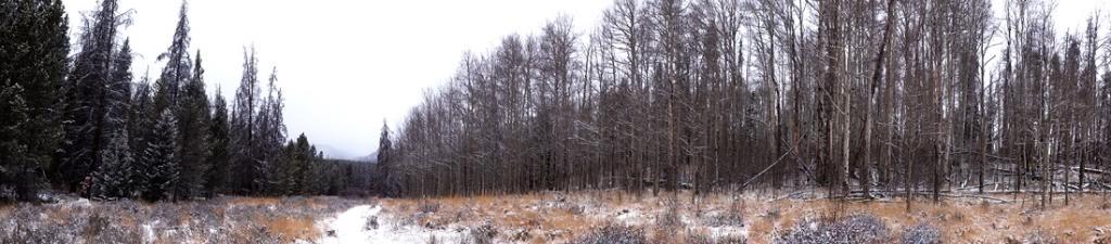 Claudia's husky birthday hike - Salt Lick Trail, Summit County *photo heavy* 34
