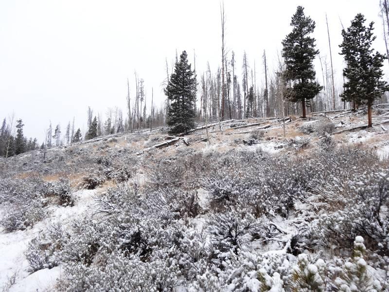 Claudia's husky birthday hike - Salt Lick Trail, Summit County *photo heavy* 37
