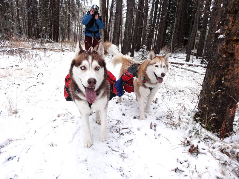 Claudia's husky birthday hike - Salt Lick Trail, Summit County *photo heavy* 46
