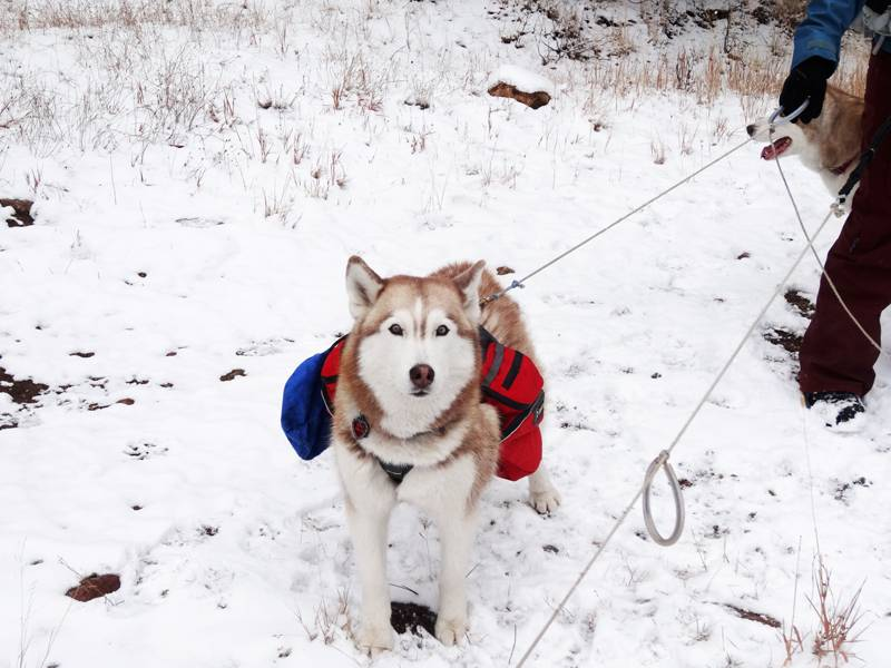 Claudia's husky birthday hike - Salt Lick Trail, Summit County *photo heavy* 48