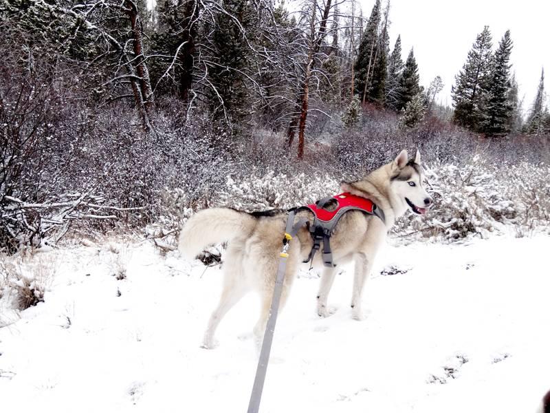 Claudia's husky birthday hike - Salt Lick Trail, Summit County *photo heavy* 6