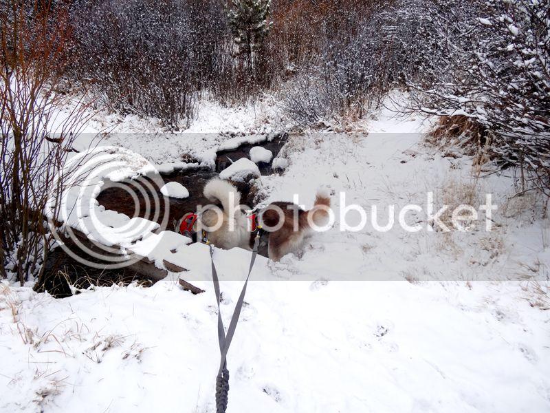 Claudia's husky birthday hike - Salt Lick Trail, Summit County *photo heavy* 7