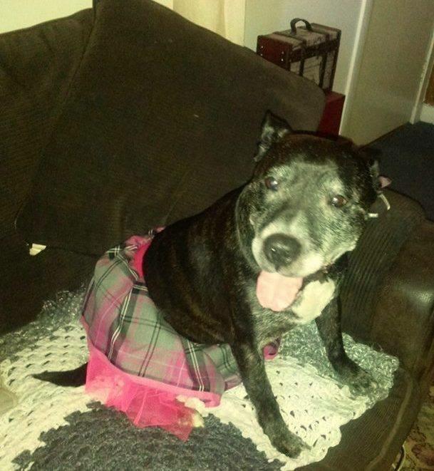 Pixie - Aged 8 - 10 in foster in Fife IMG_5863_zpsjouupkgh