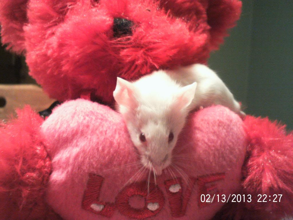 All my mice, past and present 040_zpsc98fc8f8