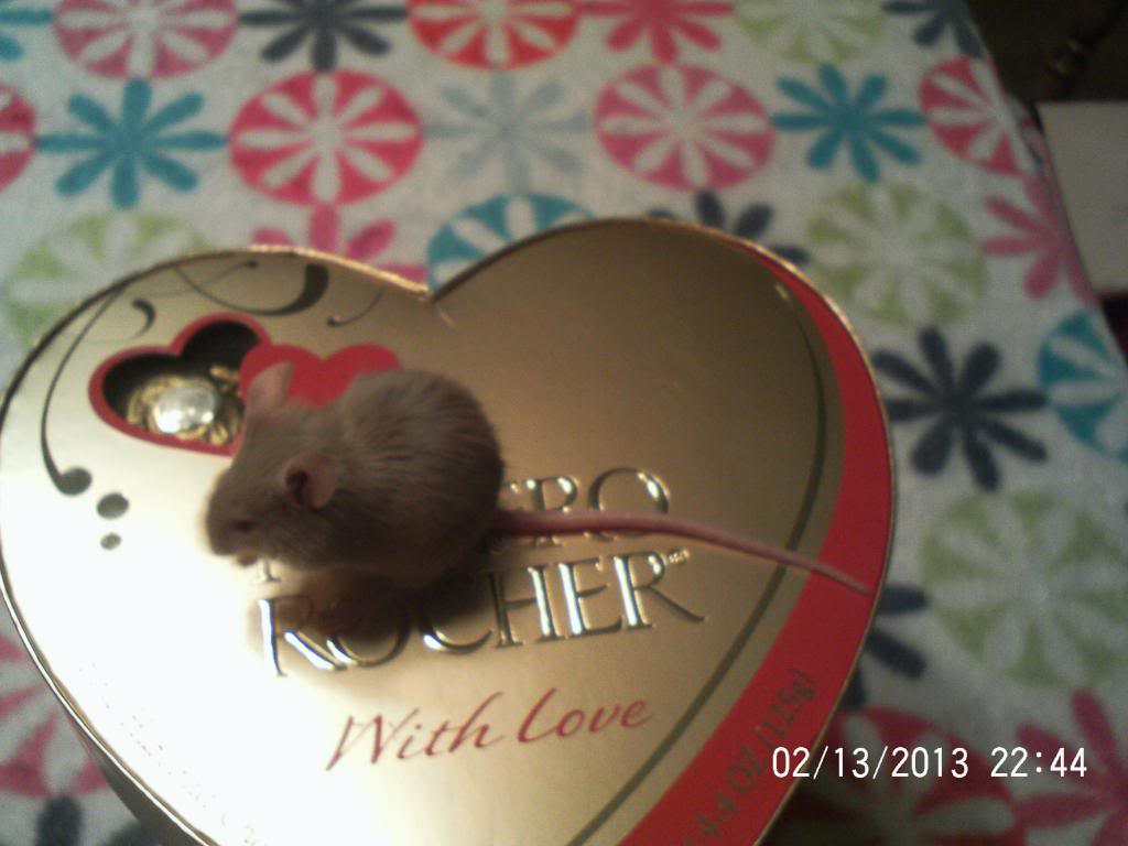 All my mice, past and present 083_zps0fbd262a