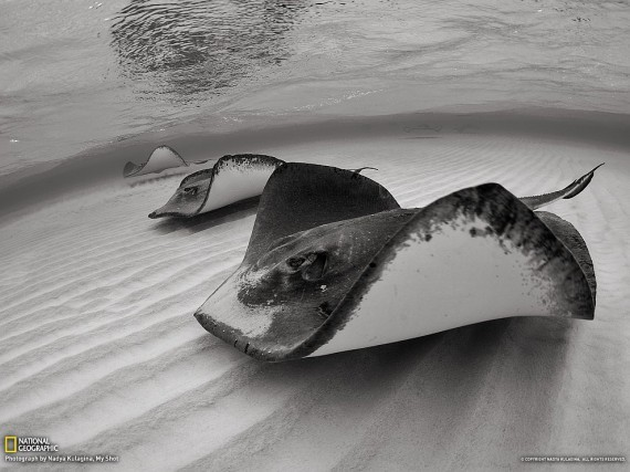 National Geographic, January 2013 - Page 2 1359318973_1359290311_1359229007_48_zps8be65bd3