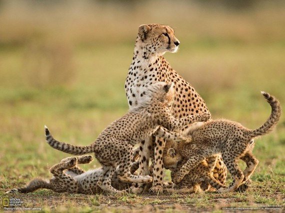 National Geographic, January 2013 - Page 2 1359318992_1359290370_1359229025_54_zps83d64d3e